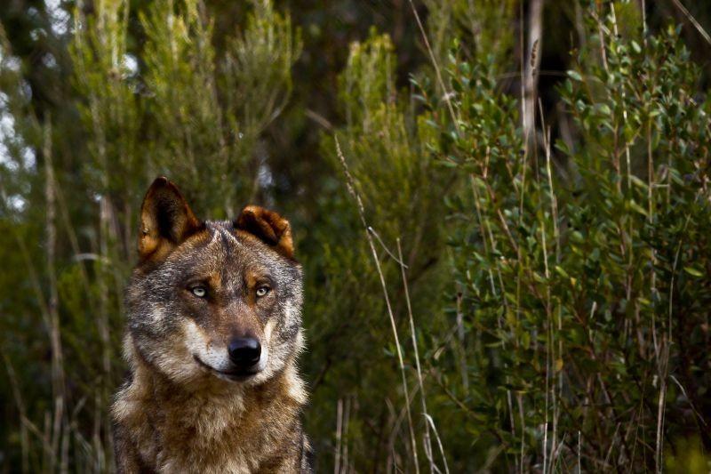 Investigadores querem preservar antigas armadilhas de lobos em Arcos de Valdevez