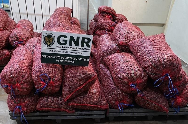 GNR apreende em Valença 5,4 toneladas de amêijoa japonesa