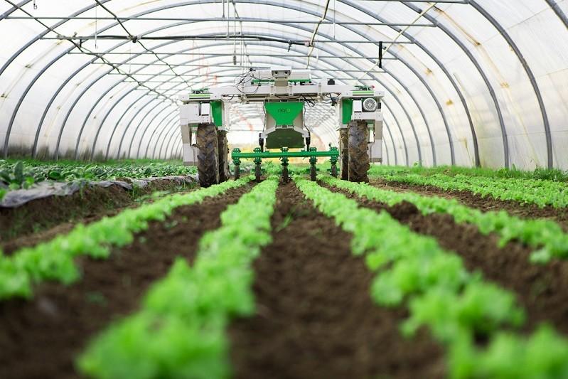 Covid-19: Ministério da Agricultura antecipa 112 M do Pagamento Único