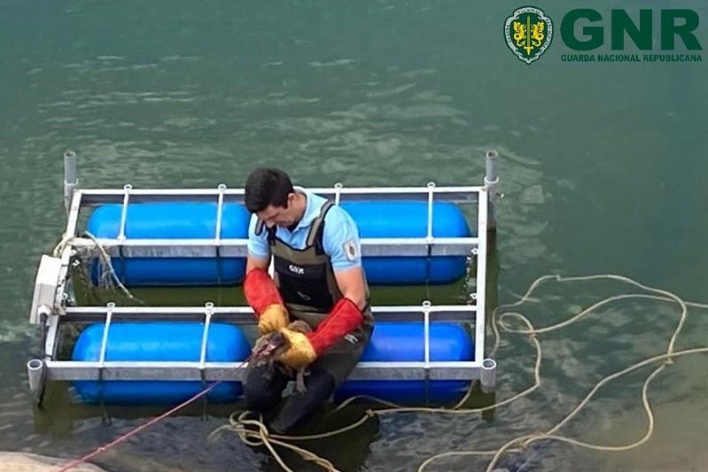PONTE DE LIMA: GNR resgata raposa de poça de retenção de água