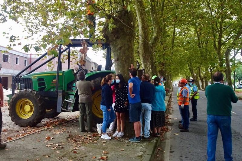 Acessos suspensos para Câmara e moradores concertarem abate de árvores em Viana