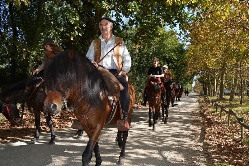 Viana do Castelo quer garrano na elevação da Equitação a Património Imaterial