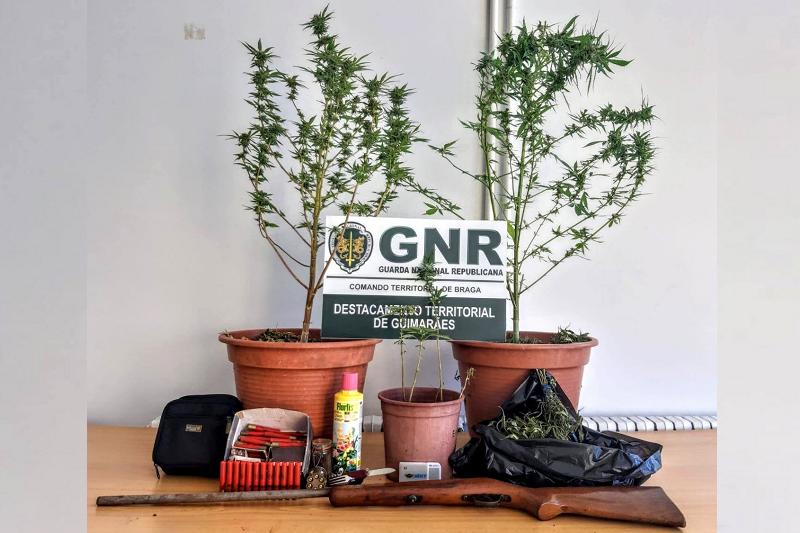 Guimarães: GNR apreende 6 plantas de canábis em residência