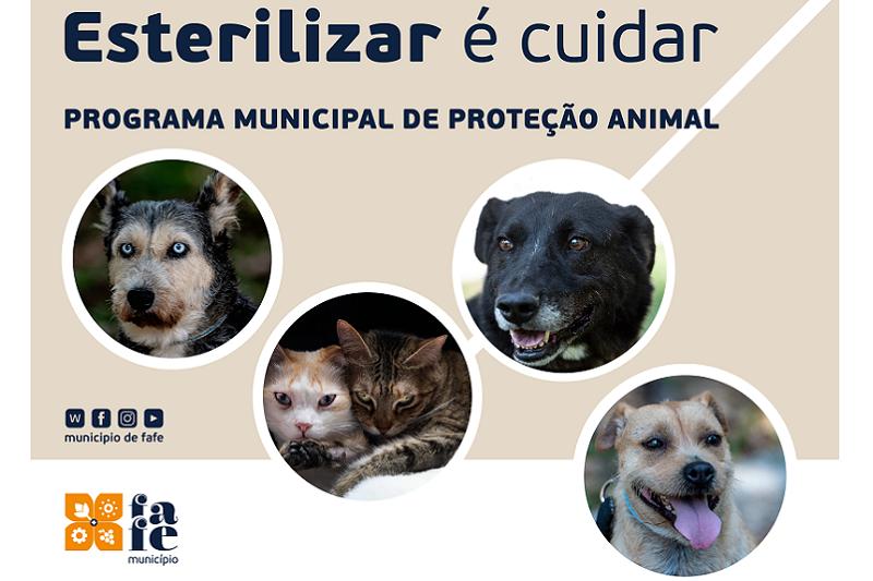 Fafe cria Programa Municipal de Proteção Animal