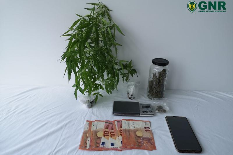 Fafe: GNR apreende plantas de canábis em casa de um jovem de 20 anos
