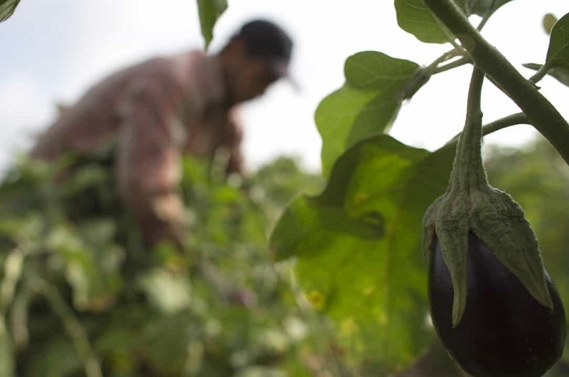 CNA acusa Governo de esconder grave crise na agricultura