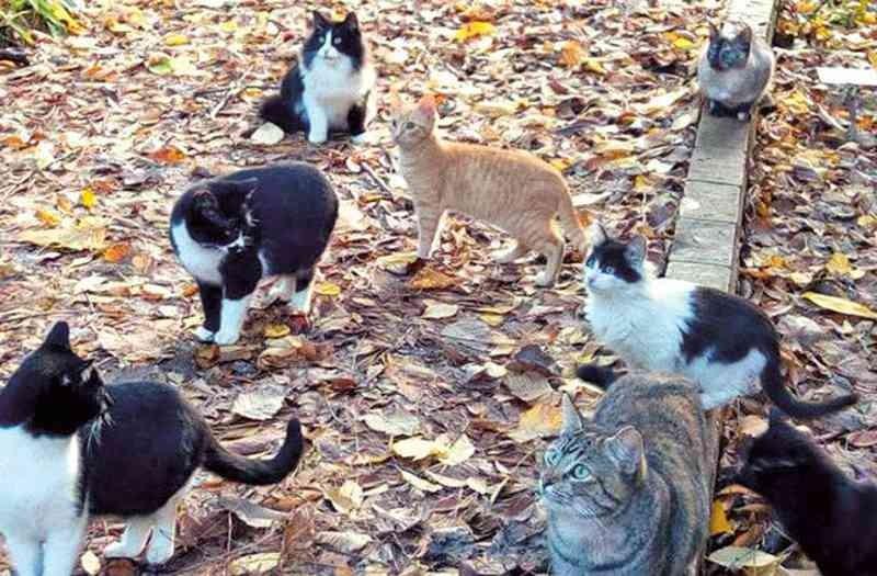 PÓVOA DE LANHOSO: Homem identificado por alegado envenenamento de gatos
