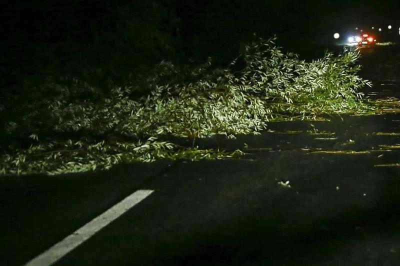 Proteção civil registou 55 ocorrências de queda de árvores e inundações