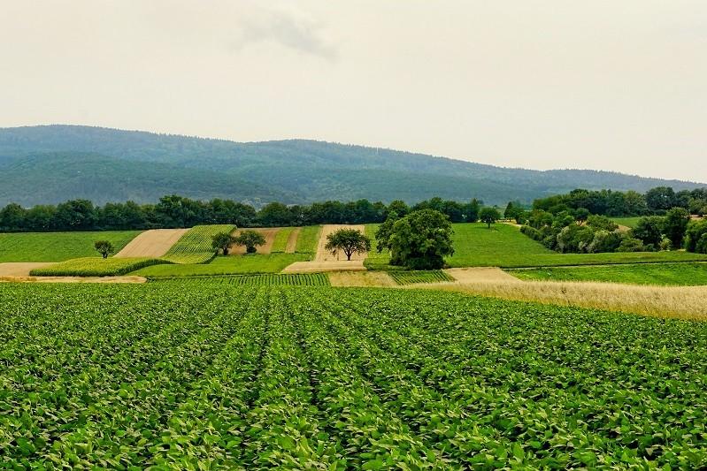 Número de explorações agrícolas cai 5% em dez anos mas superfície utilizada sobe 7%