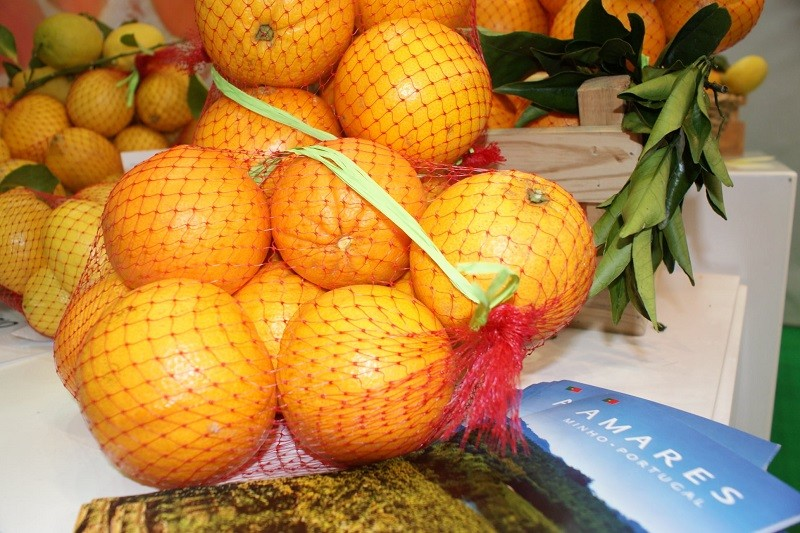 Câmara quer Laranja de Amares como património vegetal de interesse municipal