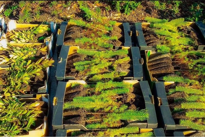 Esposende recebe mais de 2000 árvores autóctones para reflorestação
