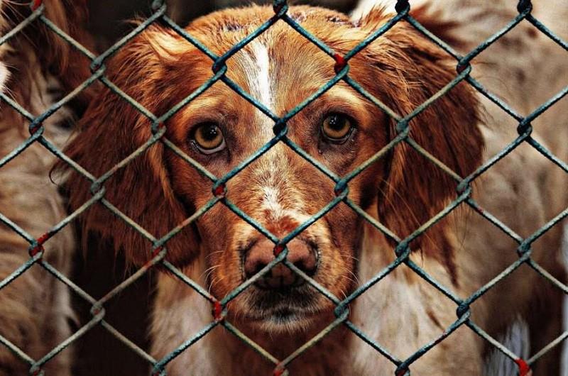 PAN questiona câmara de Cabeceiras de Bastos sobre centro de recolha animal
