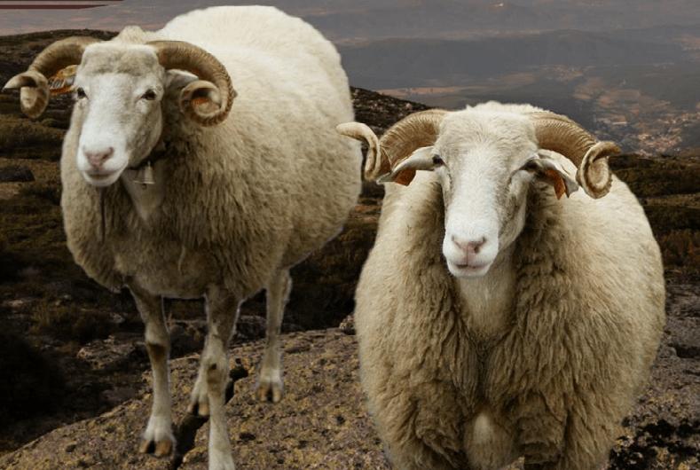 Câmara de Cabeceiras de Basto investe 16 mil euros em apoios a criadores de animais