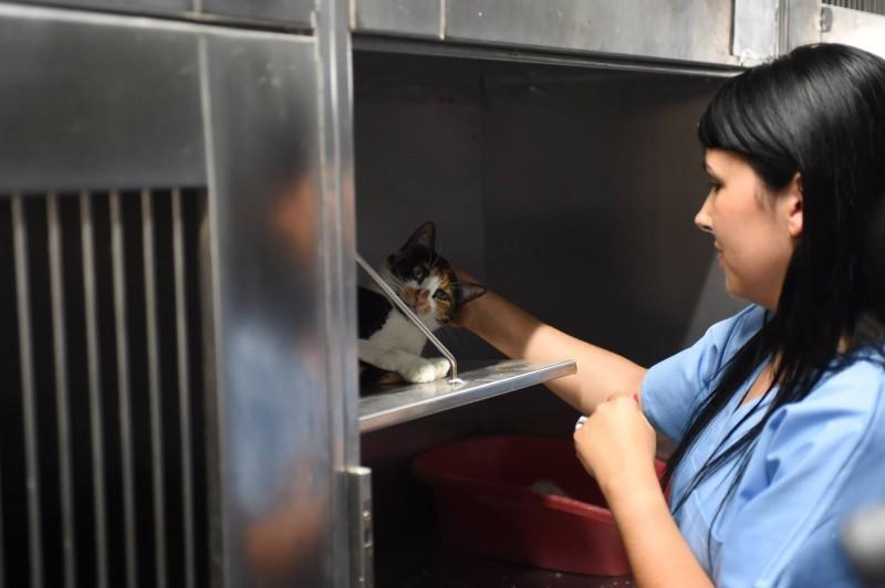 Mais de 300 felídeos foram esterilizados ao abrigo do programa CED