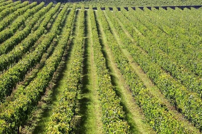 Grupo francês aposta nos vinhos verdes com quinta histórica de 25 hectares em Monção