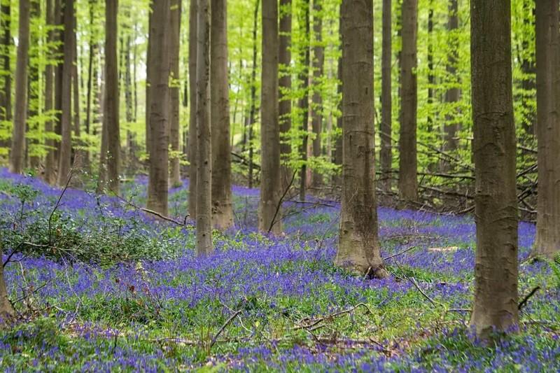 Governo anuncia investimento de sete mil milhões de euros na floresta
