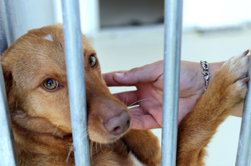 Quase 50% das autarquias não têm como cuidar e esterilizar cães e gatos