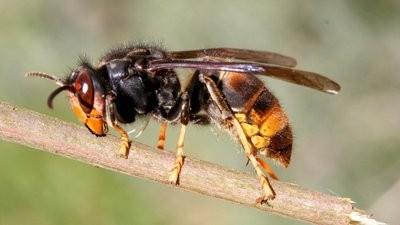 Homem morre em Guimarães presumivelmente após picada de uma vespa