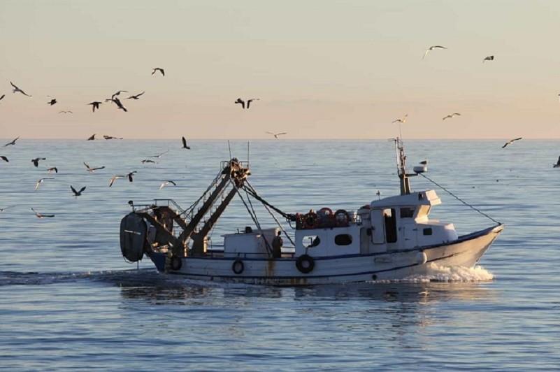Barcos de Caminha e Castelo do Neiva exigem a mesma compensação por parque eólico