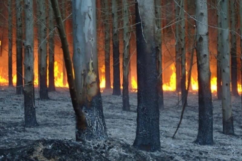 Incêndios: Manta de eucaliptos aviva memória dos dias em que o diabo andou à solta em Monção