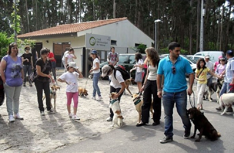 Canil do Alto Minho com cerca de 300 animais em lista de espera para acolhiment