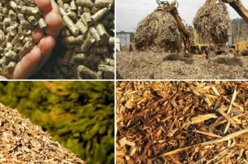 Projeto ibérico quer pôr biomassa da poda a aquecer casas