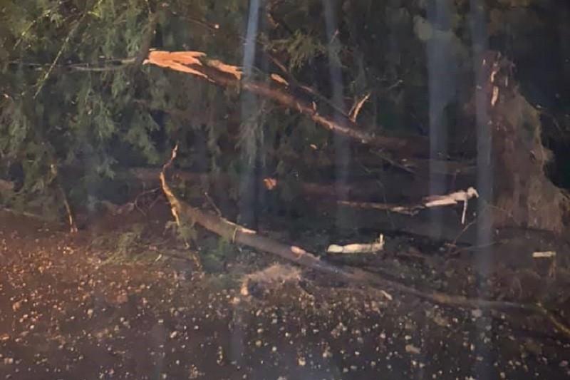 Mau tempo: Distrito de Braga com 218 ocorrências, 172 são quedas de árvores