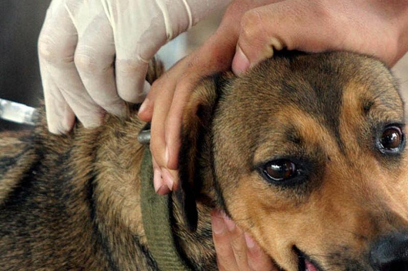 Vizela oferece vacinação e identificação eletrónica de animais de companhia