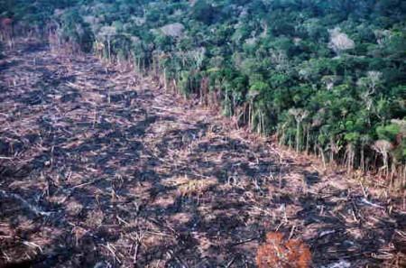 Desflorestação e alterações climáticas aumentam riscos de extinção nas zonas tropicais - estudo