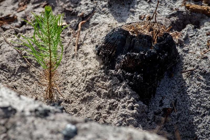 Município de Esposende oferece 4.900 árvores para reflorestar áreas ardidas