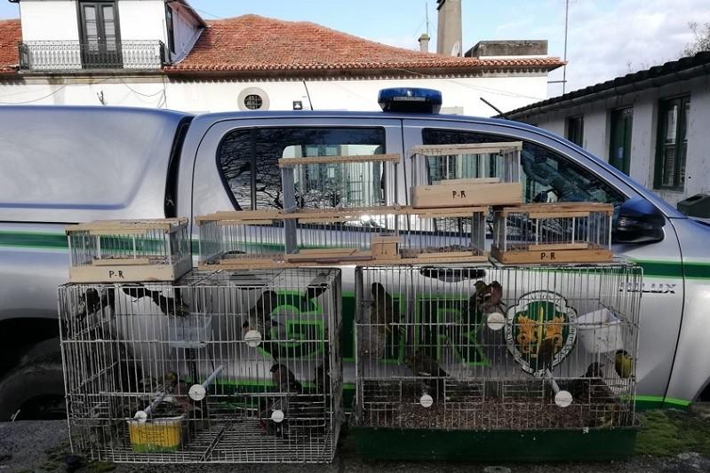 Homem constituído arguido por comércio ilegal de aves em feira na Póvoa de Varzim