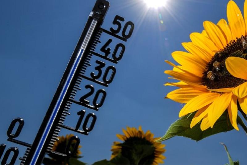 Temperaturas elevadas deixam Interior sob aviso amarelo para o início da semana