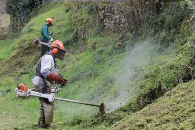 Incêndios: Termina prazo para limpar terrenos após prorrogação devido à pandemia