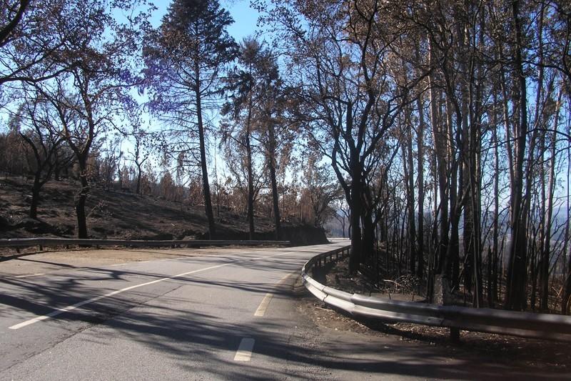 Privados mantêm ao abandono terrenos que arderam em 2017