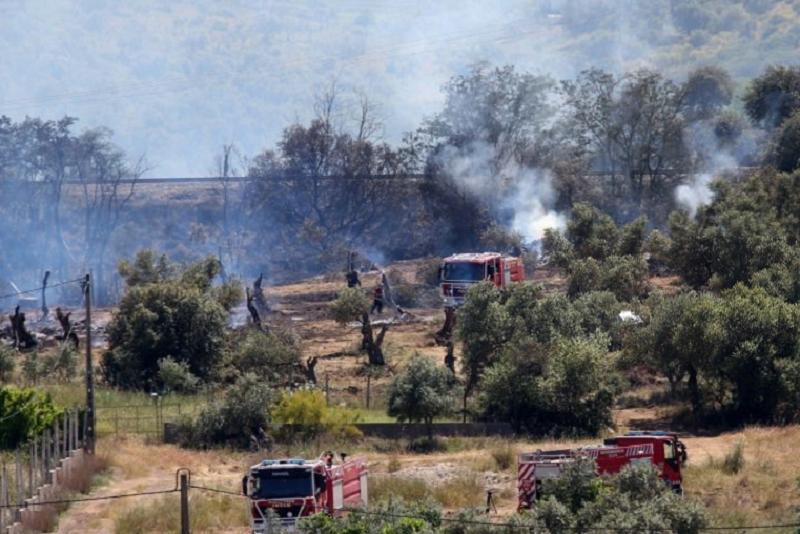 Incêndios rurais e violência doméstica nas prioridades da proposta de lei de política criminal
