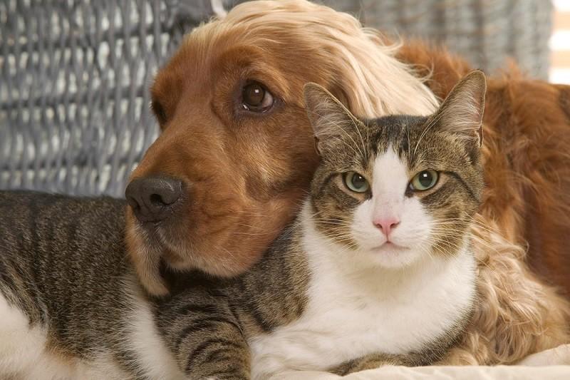 Caminha: Esterilizados cerca de 250 animais de companhia