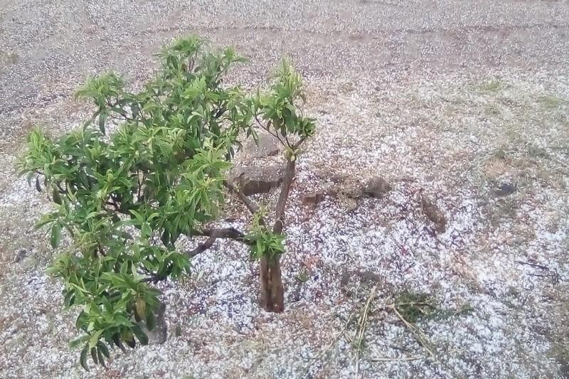 Queda de granizo e trovoada seca causam prejuízos a produtores do interior norte