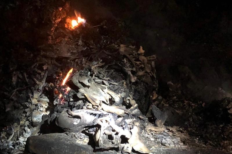 Incêndios: GNR diz que morte de animais em Santo Tirso se deveu à dimensão do fogo